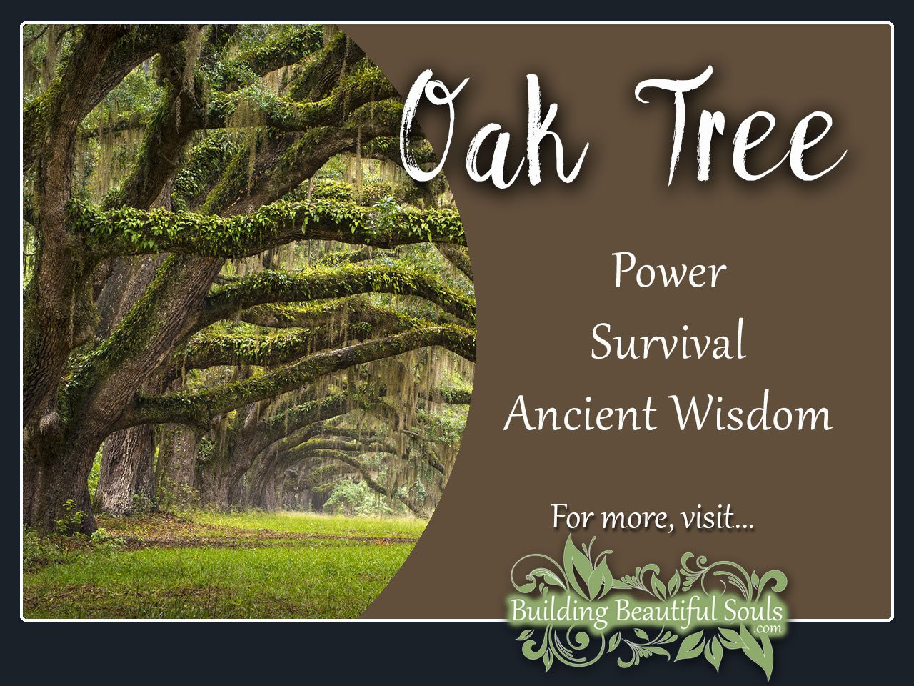 Oak Tree Meaning & Symbolism   Tree Symbolism & Meanings Inside Most Up To Date Oak Leaf Double Rings (View 16 of 25)